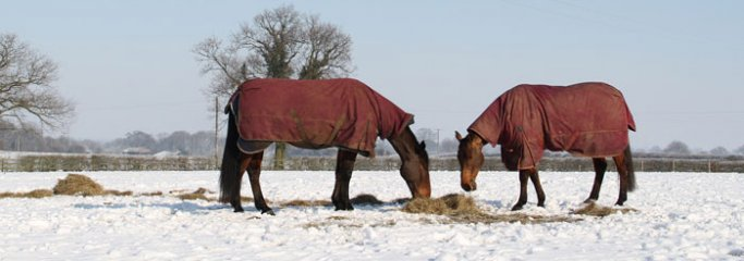Grazing - boys in snow