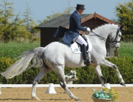 See the dressage profiles